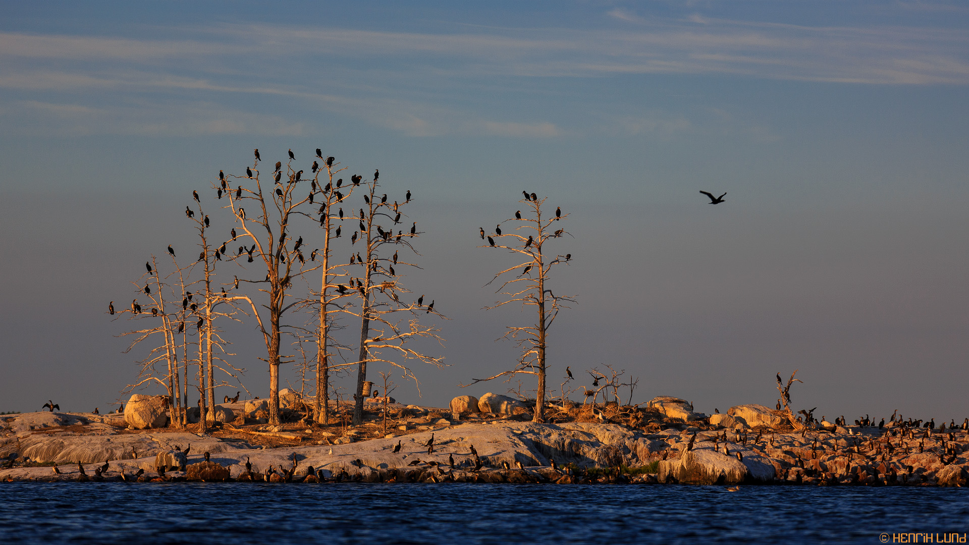 An totally polluted island by great cormorants in the Porvoo archipelago, Finland, August 2013.
