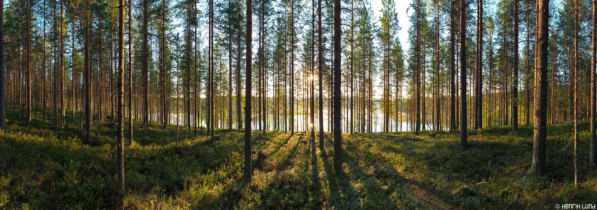 Panorama view over Vaittisenlampi in Joensuu, Northern-Carelia, Finland. August 2014.