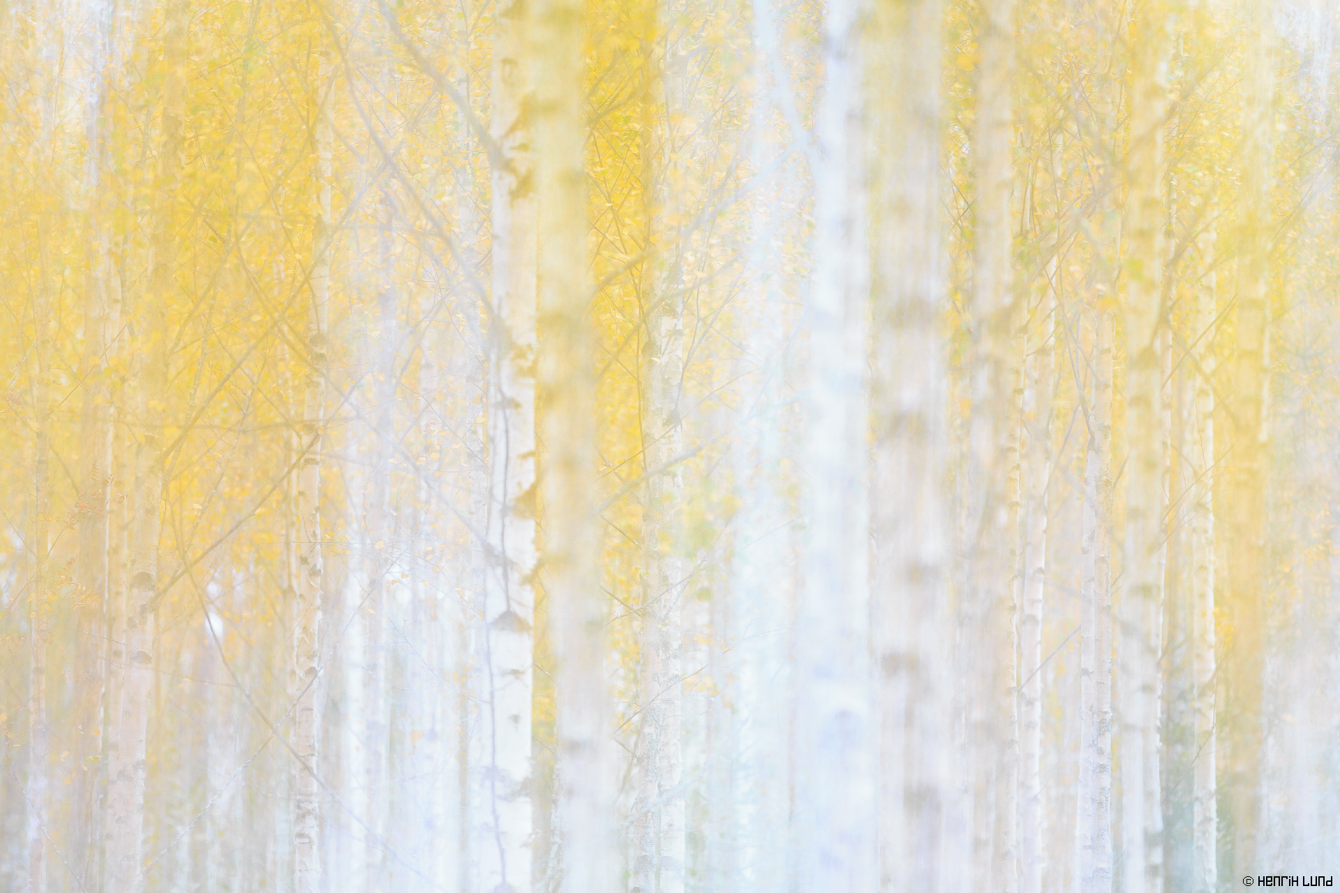 A multiple exposure made-in-camera out of two images. Birchforest in autumn colors. Lappträsk, Finland, October 2014.