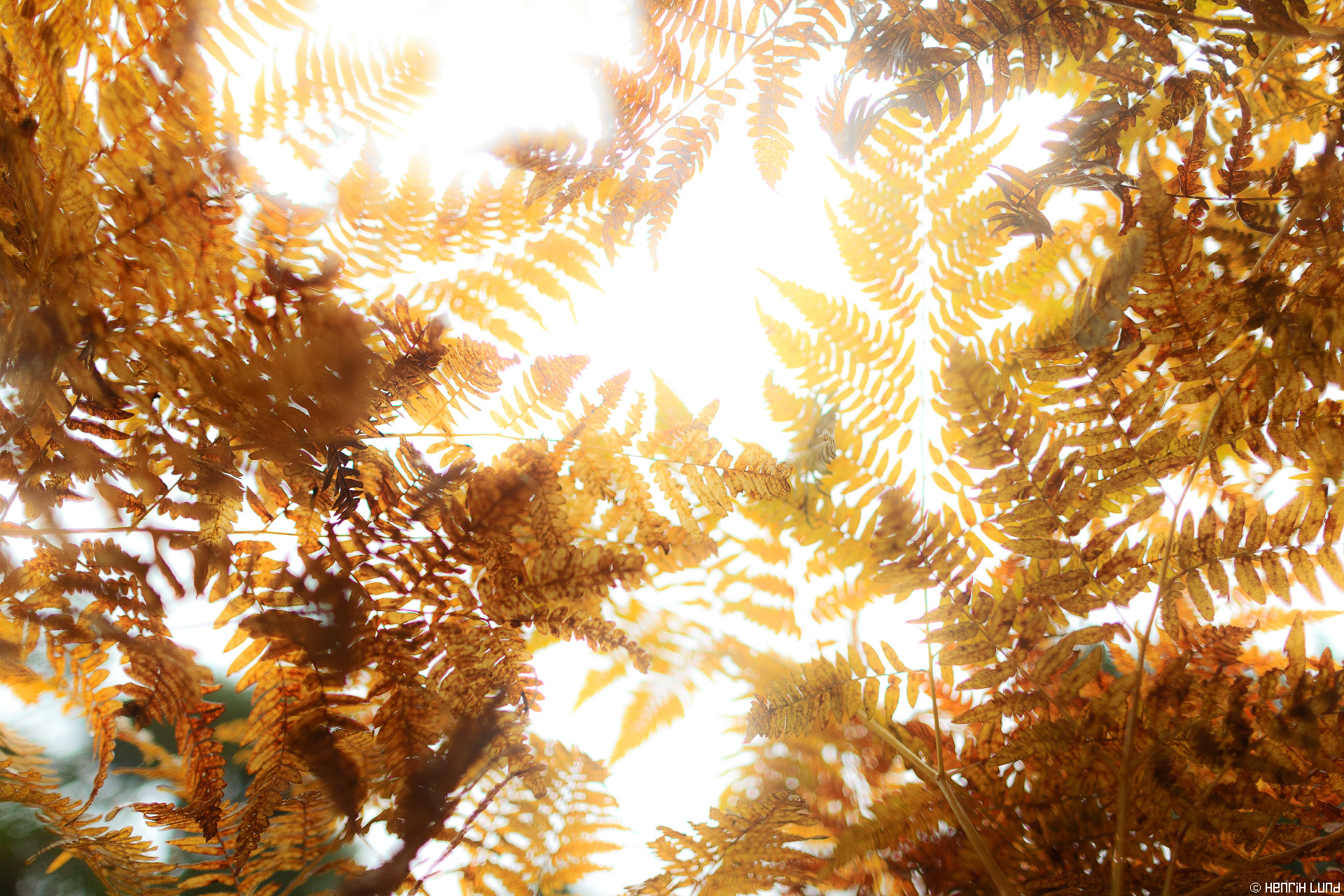 Ferns photographed straight from below. Lovisa, Finland, September 2014.