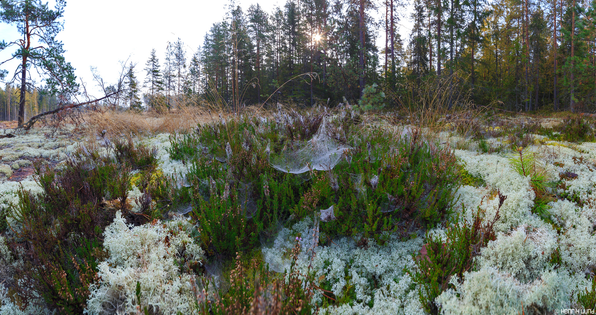Morning dew in the autumn forest. Norrby, Lappträsk, Finland, September 2014.
