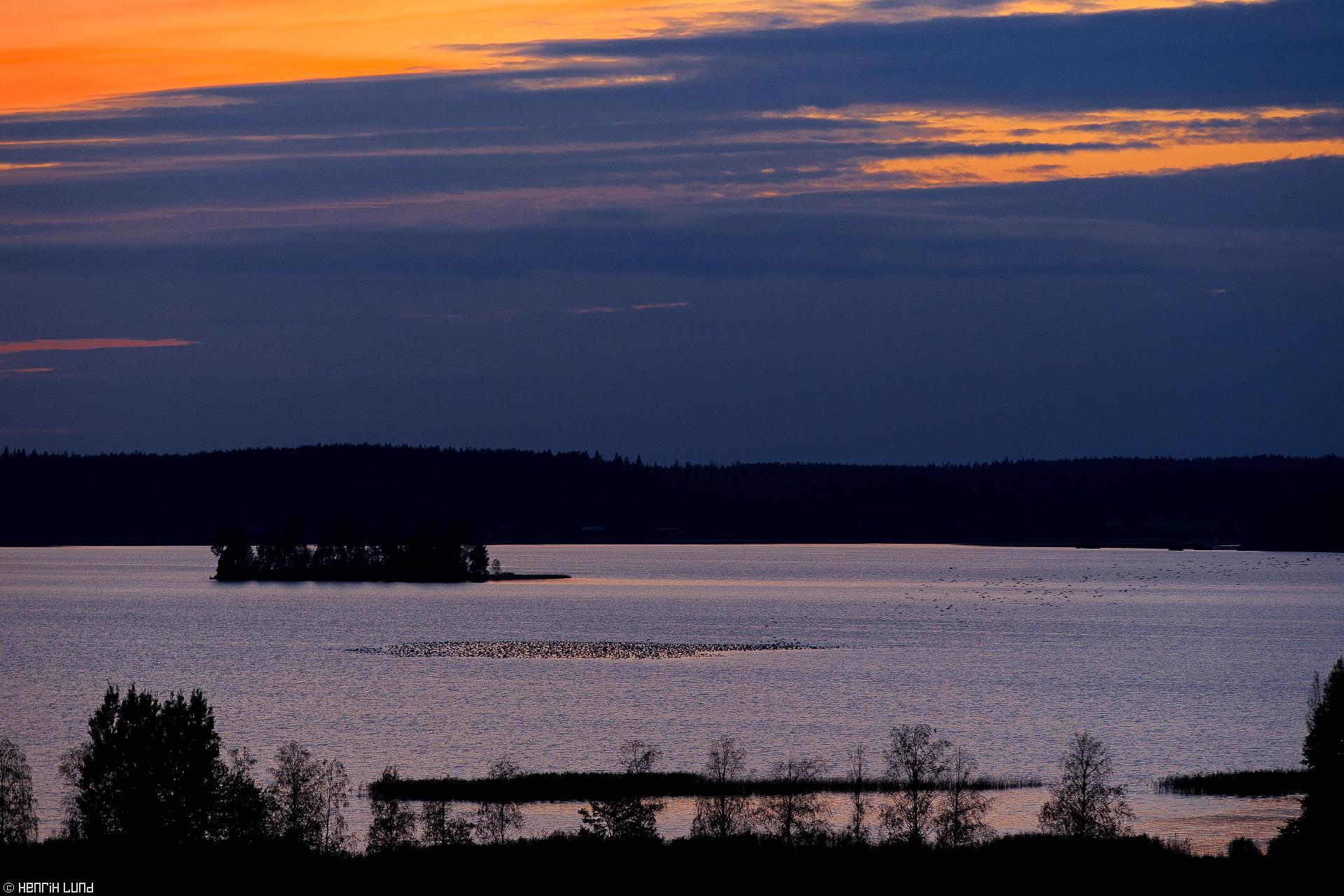 Thousands of geese landing on the lake Lapinjärvi moments after sunset. Lappträsk, Finland, October 2014.