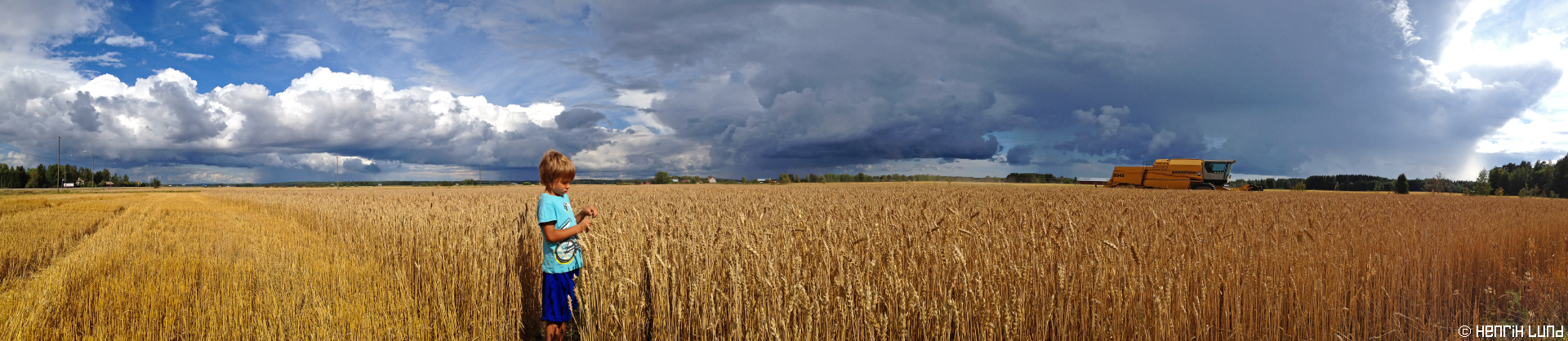 Panorama of Rasmus in the wheatfield in Skånkärret, Lappträsk, Finland. August 2014. Photogrpahed with panorama-function in Iphone 4S.