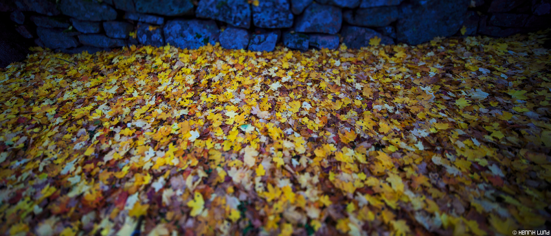 Panorama over fallen autumn leaves close to the churchyard, Lappträsk, Finland, October 2014.