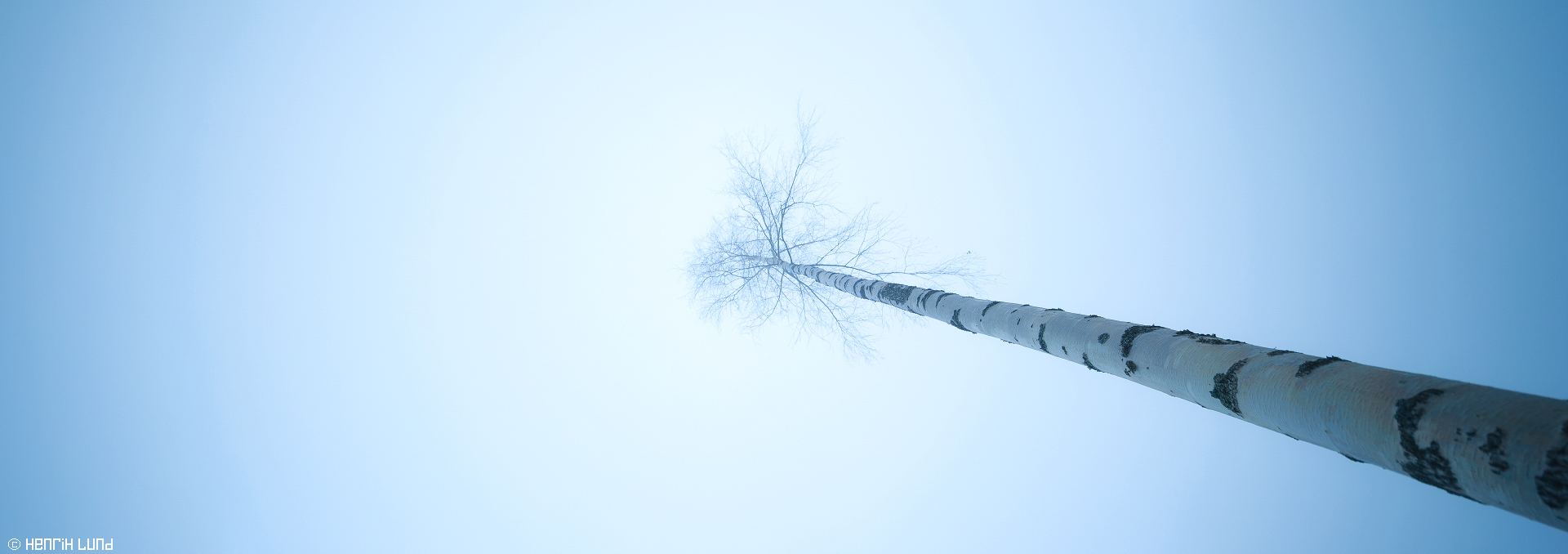 A lonely birch standing in the november mist. Lappträsk, Finland, November 2014.