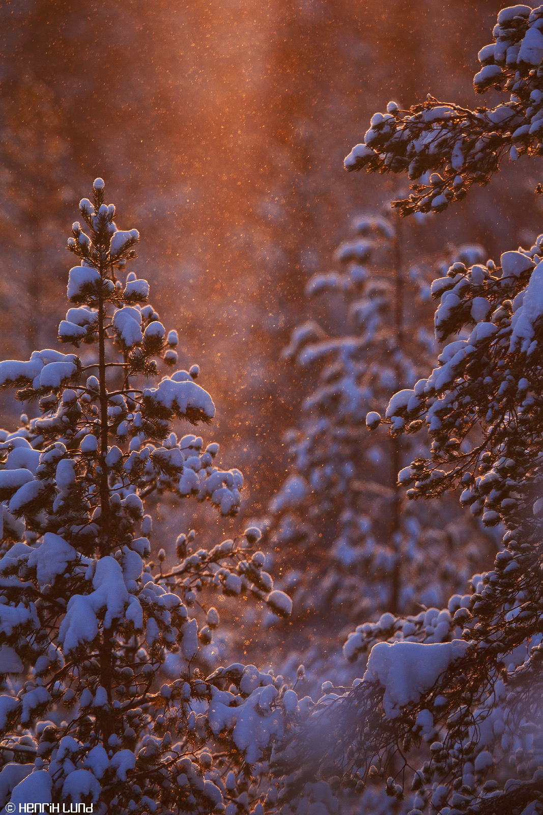 Backlit snowfall in -26, Norsjö, Sweden, January 2015.