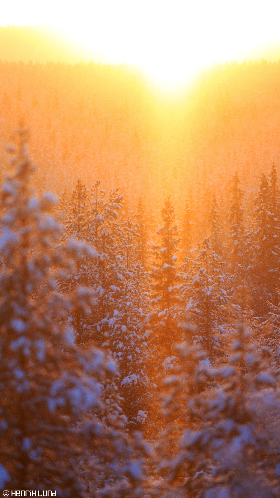 Backlit snowforest in -26, Norsjö, Sweden, January 2015.