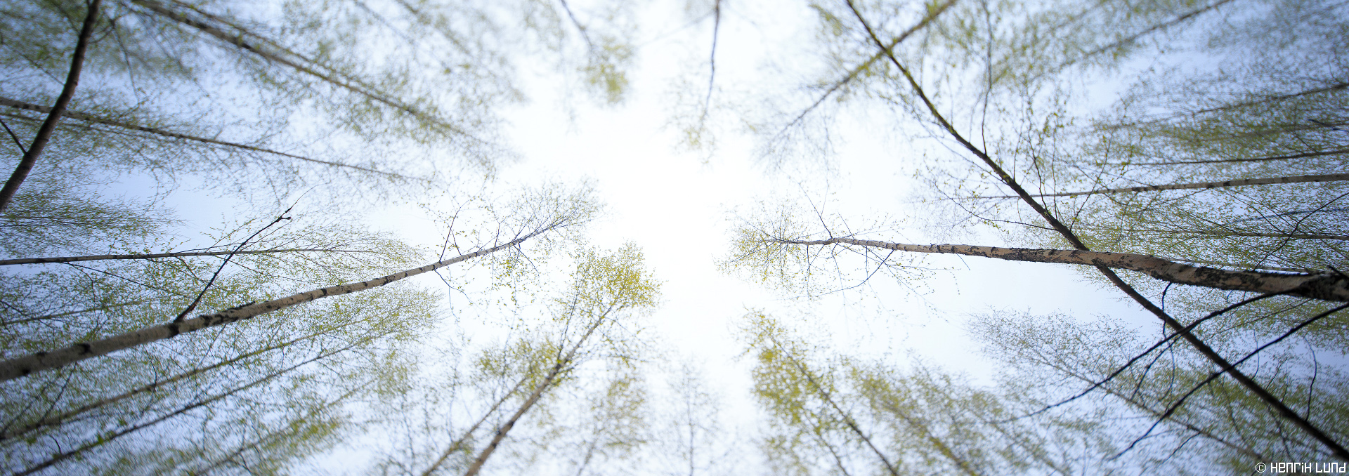 Birch forest panorama in early spring. Norrby, Lappträsk, Finland, May 2015.