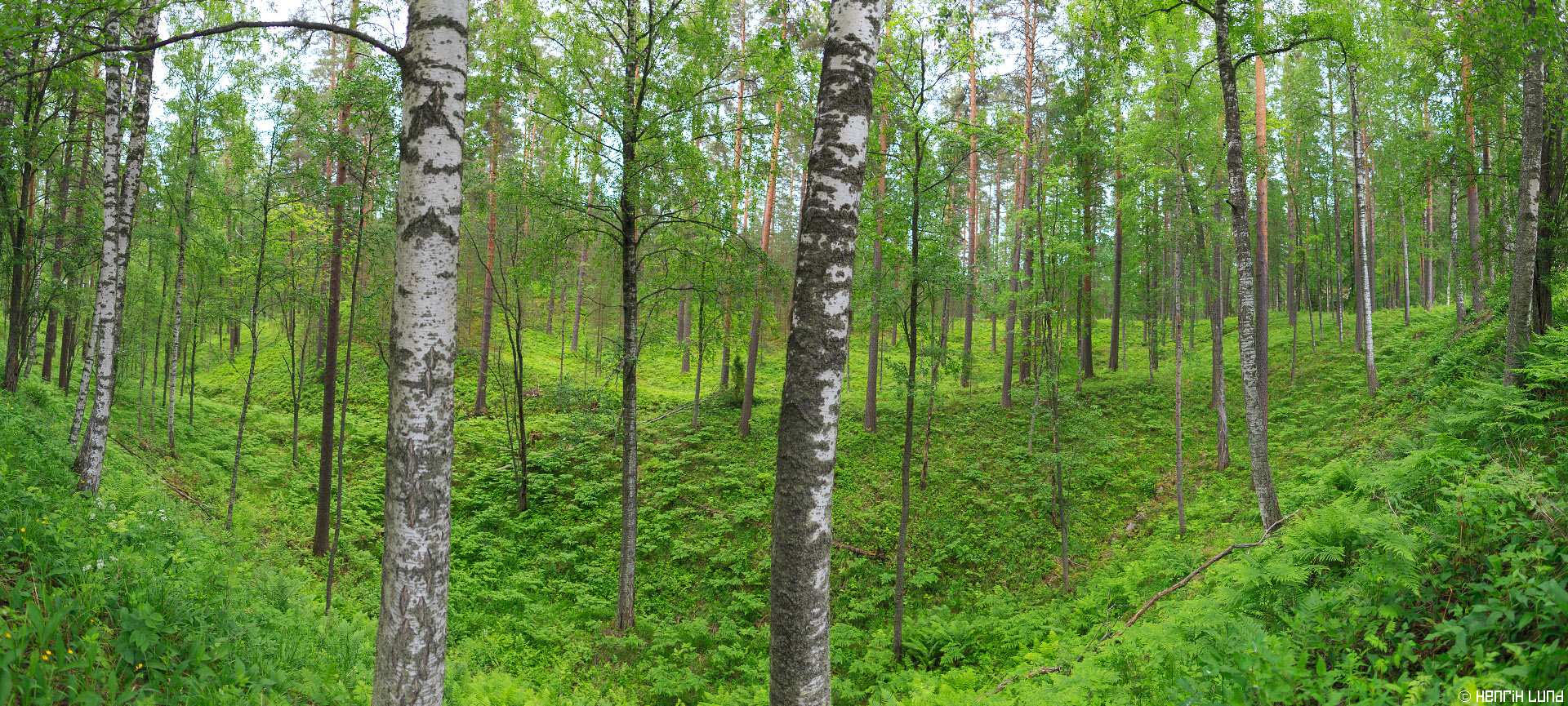 Panorama landscape from Punkaharju, Finland. June 2015.