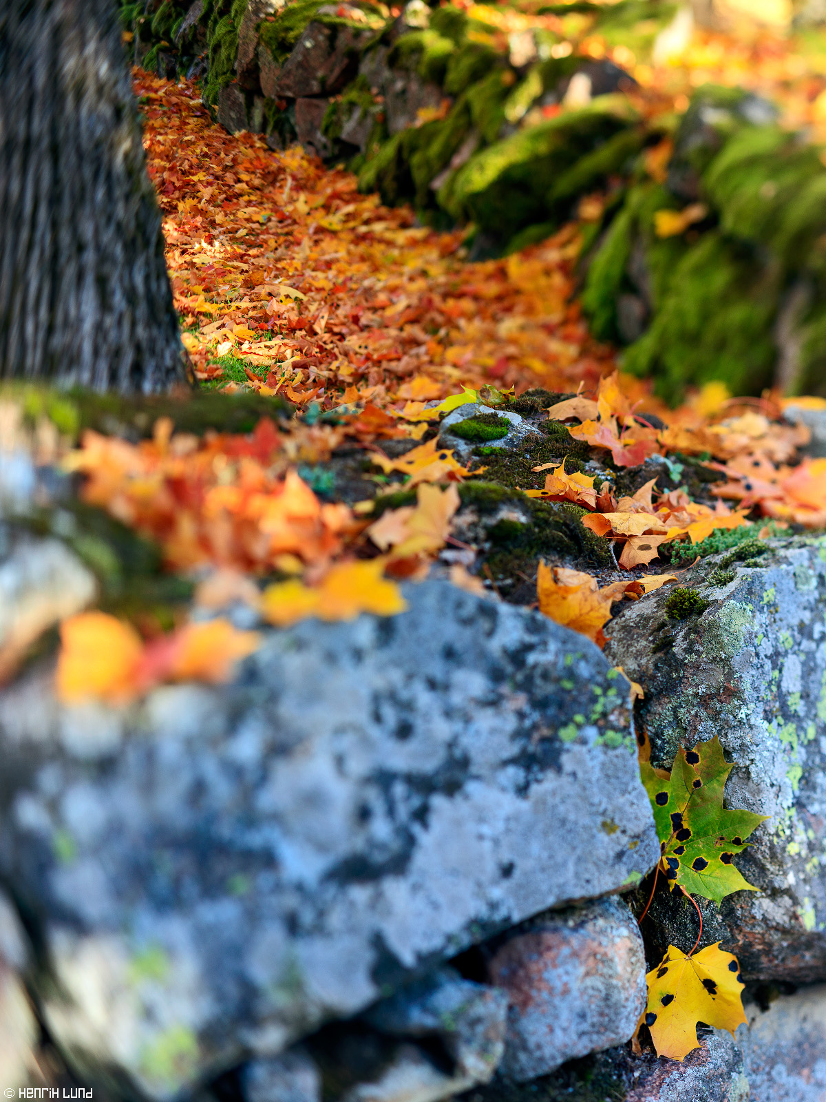 Vertical panorama consisting of three tilted horizontal images. TS-E lens used. Autumnleaves in the beautiful centre of Lappträsk, Finland, October 2015.