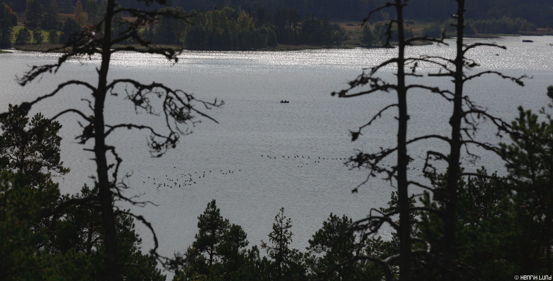 Migrating geese approaching for landing with fishermen observing close by. Lappträsk, Finland. September 2015.