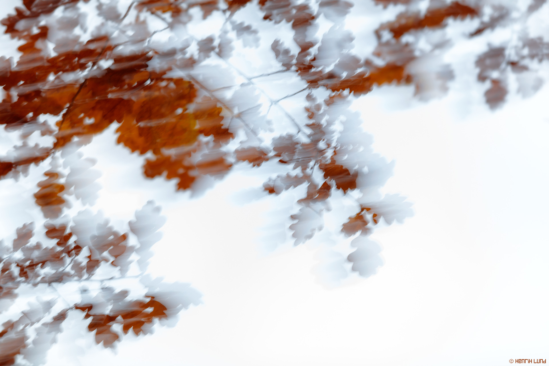 The last oakleaves still hanging for the season. Panning with longer exposure. Lappträsk, Finland, October 2015.