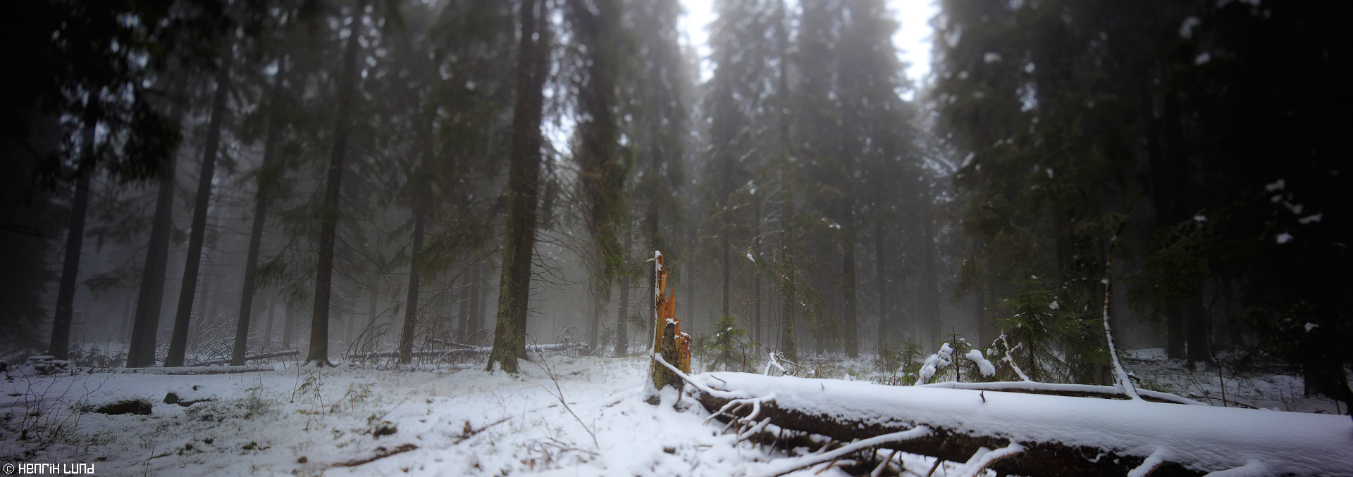 Panoramic forest with first snow from Puijo Nature conservatin forest. November 2015.