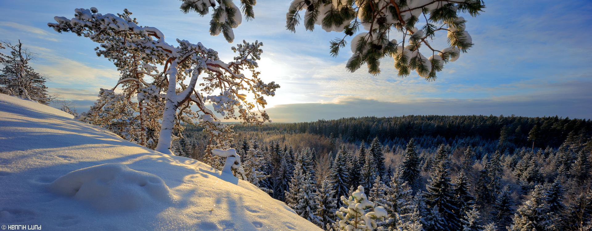 Backlit snowy pine viewed from Falkberget in Norrby, Lappträsk, Finland. January 2016.