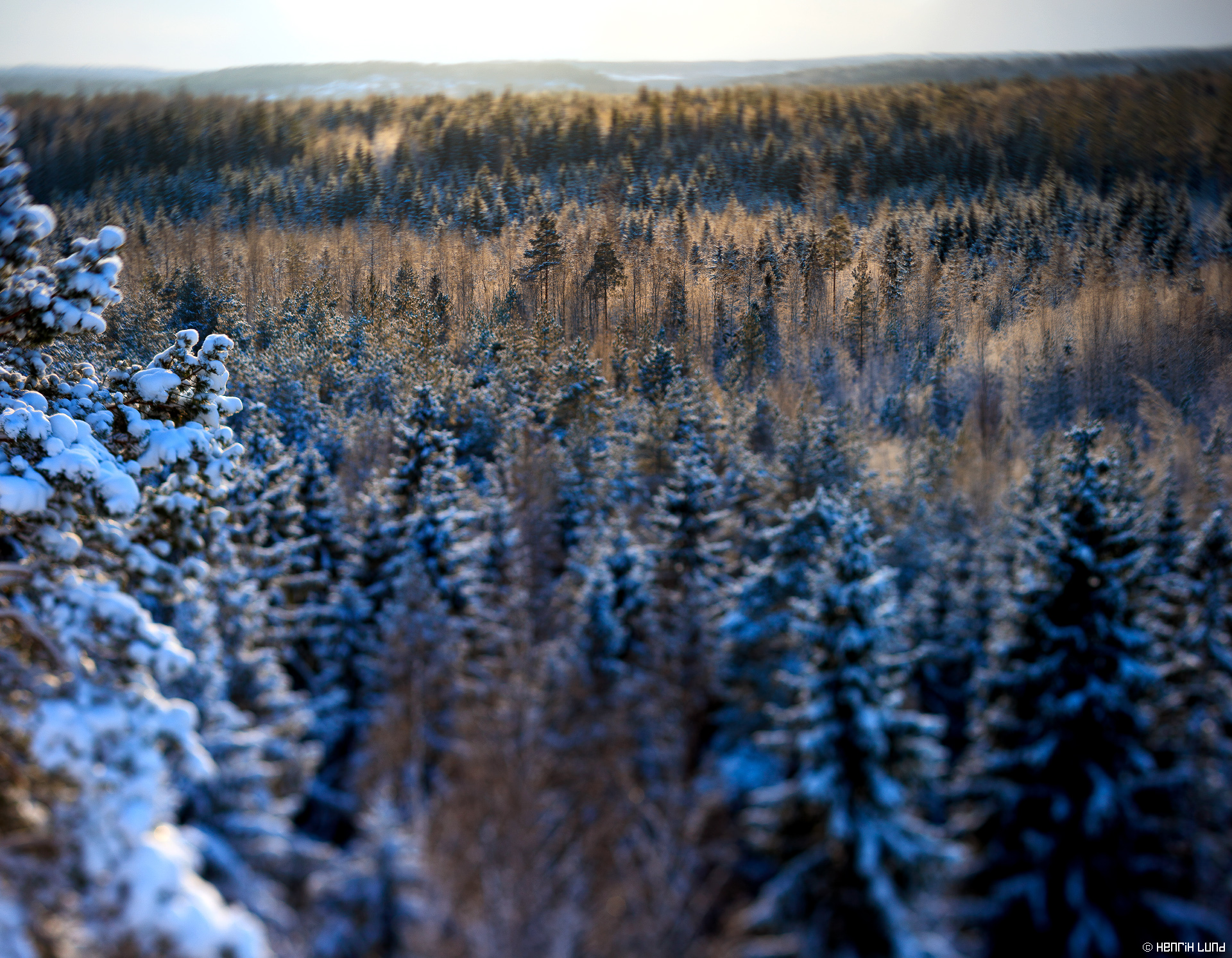 Backlit snowy forest viewed from Falkberget in Norrby, Lappträsk, Finland. January 2016.