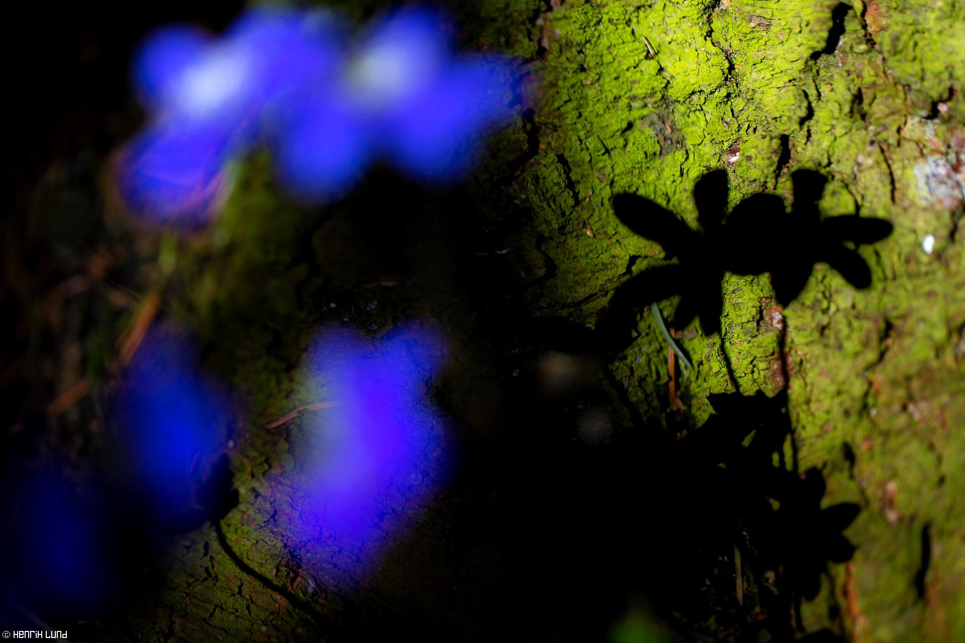 Shadows of liverworts. Lappträsk, Finland. May 2016.