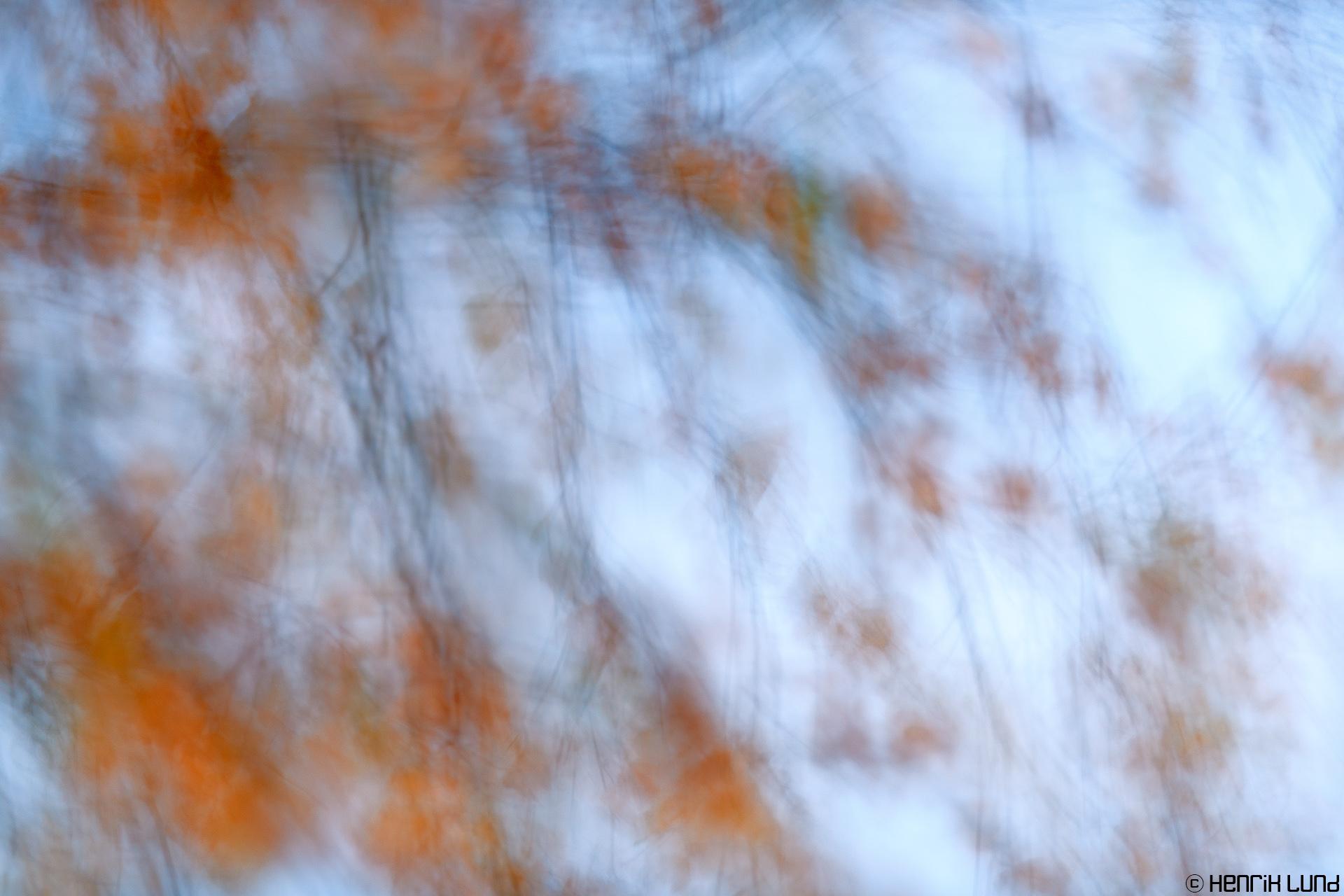 Autumn leaves in movement. Lappträsk, Finland, October 2016.