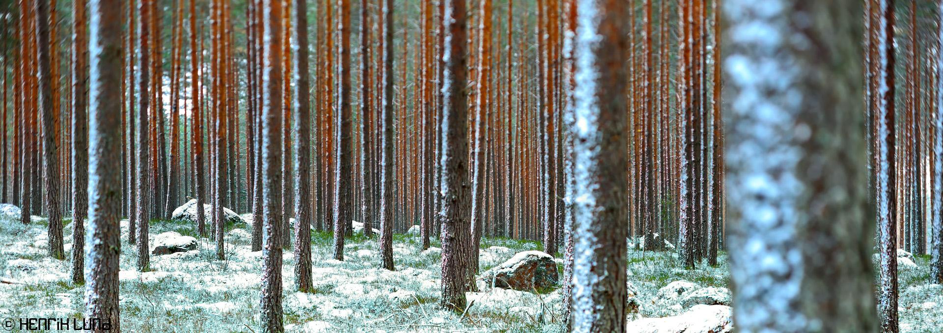 TS-E panorama at first snow of the season taken in Mysmalm, Lappträsk, Finland. November 2016.