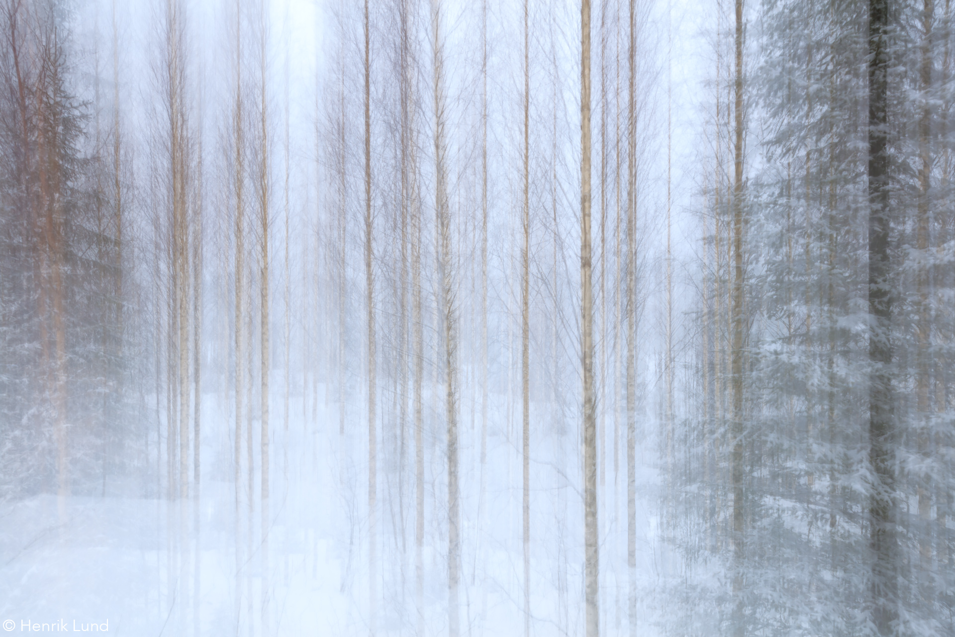 Birch forest panned with TS-E -lens. Hoilola, Joensuu, Finland. February 2017.