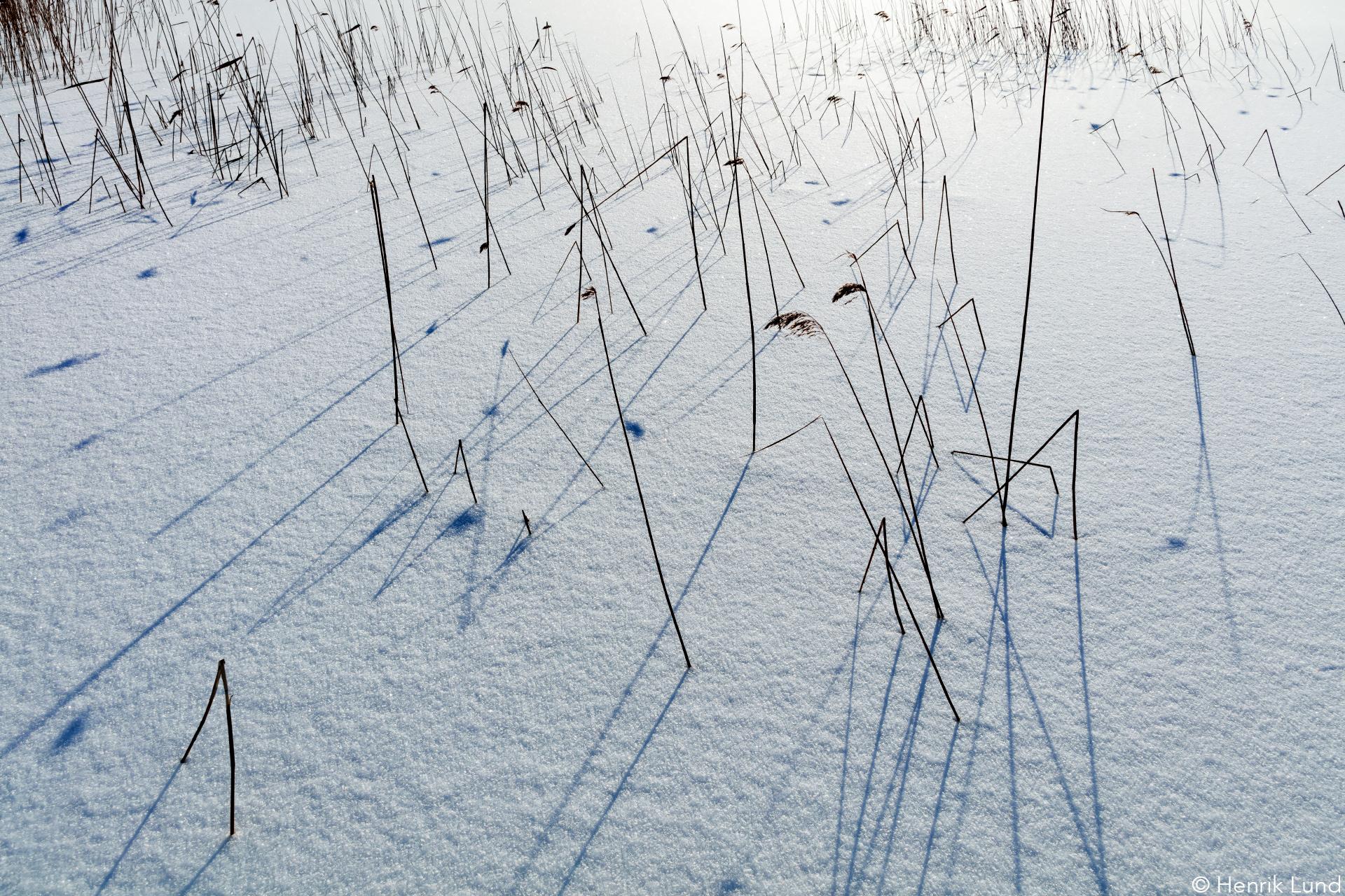 Reeds and shadows. Lappträsk, Finland. February 2017.