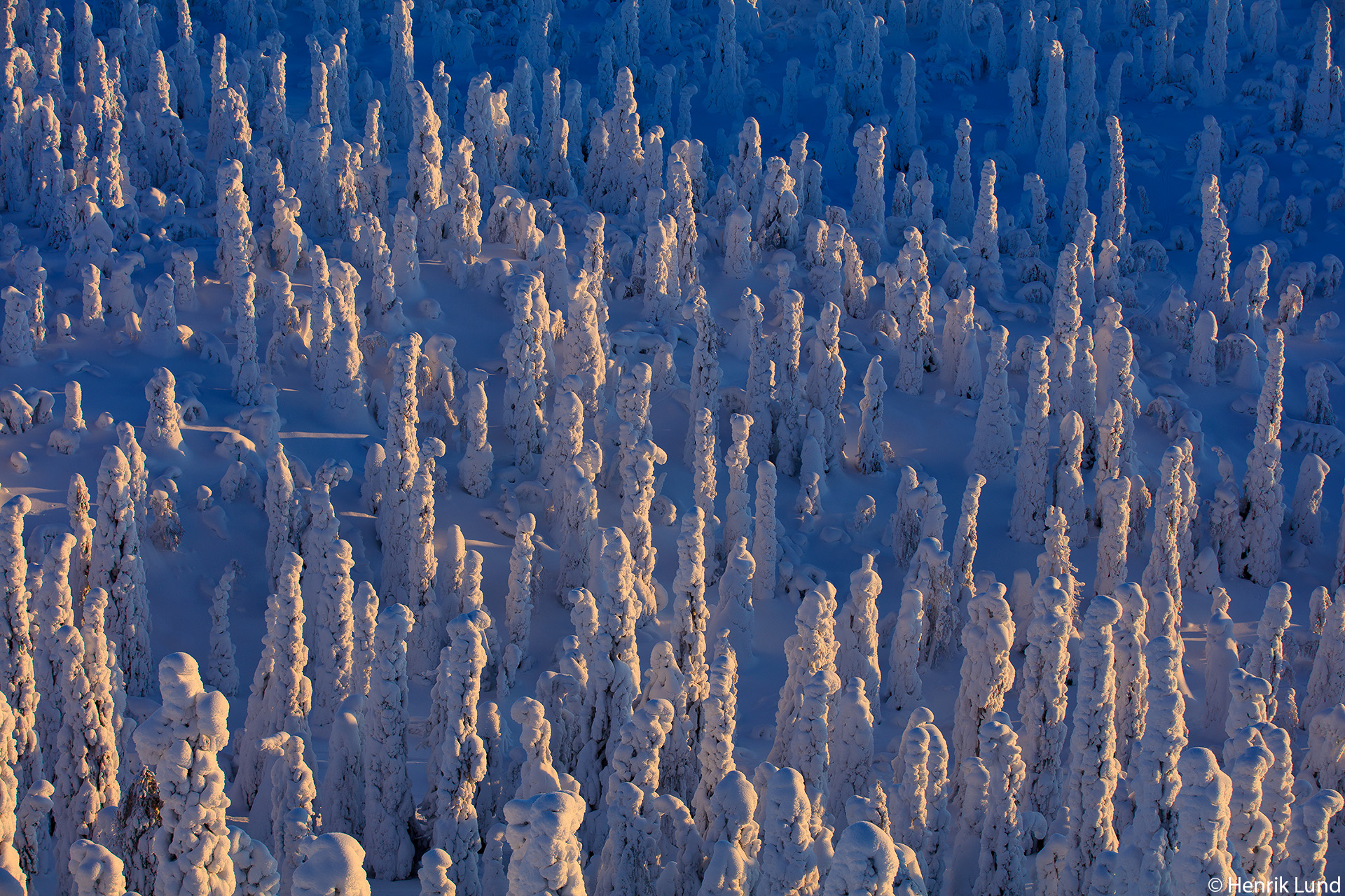 Snowcovered trees viewed from the top of mountain Valtavaara in Kuusamo, Finland. February 2018.