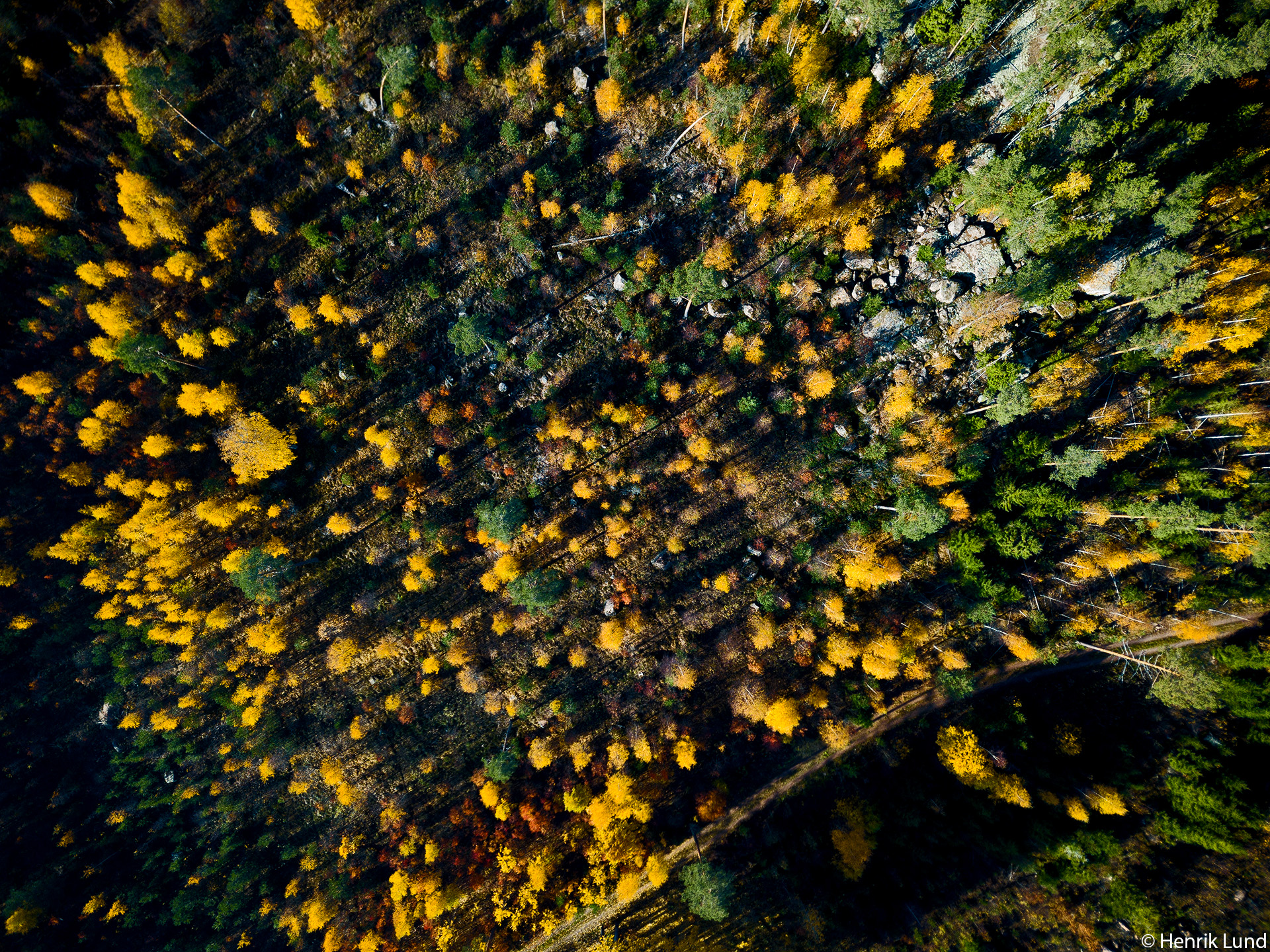 Autumn forest in spectacular colors. Lappträsk, Finland. October 2018.
