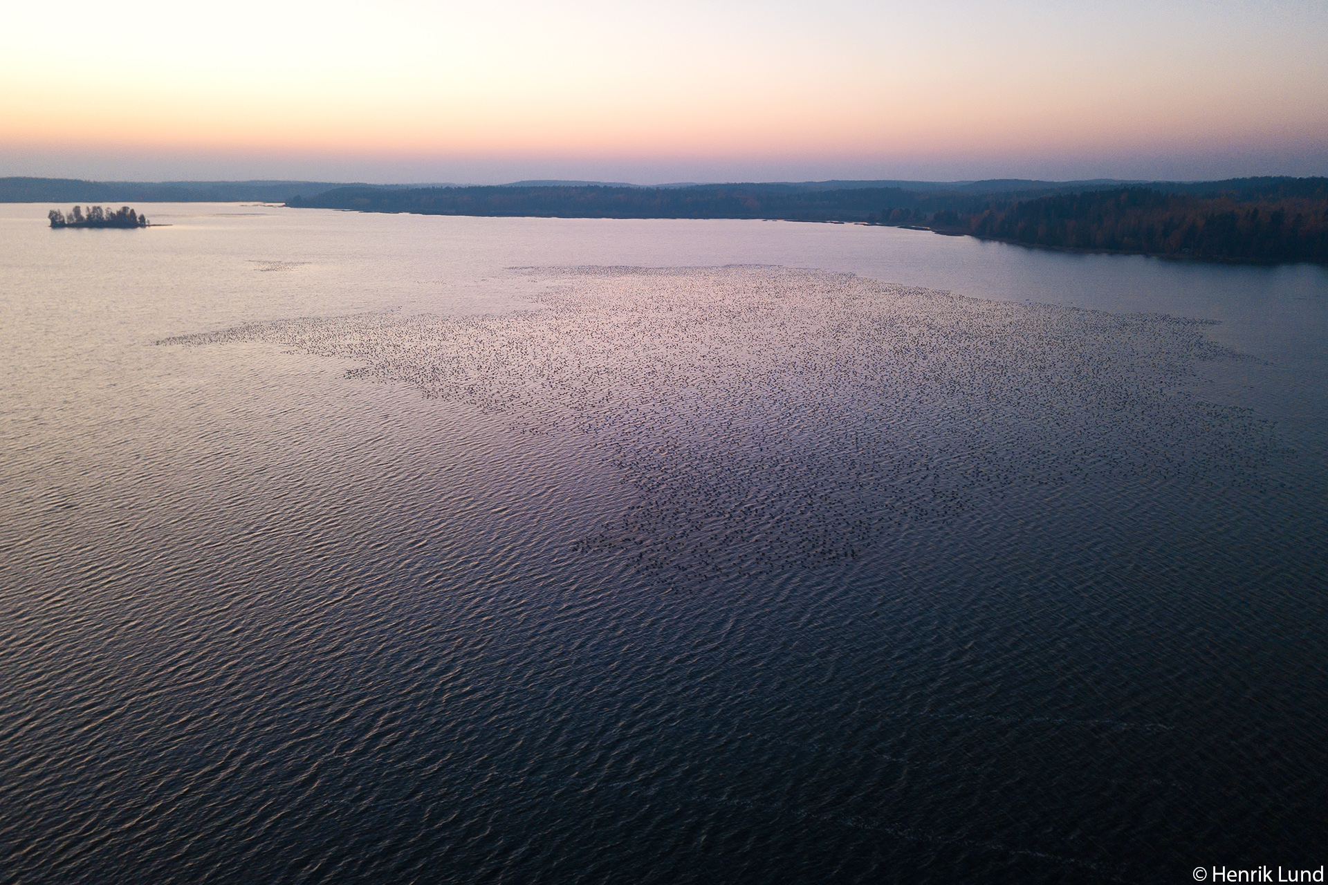 Aerial view over the big flock of geese on lake Lapinjärvi. Finland. October 2018.
